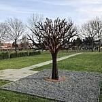 gedenkboom op begraafplaats Duffel